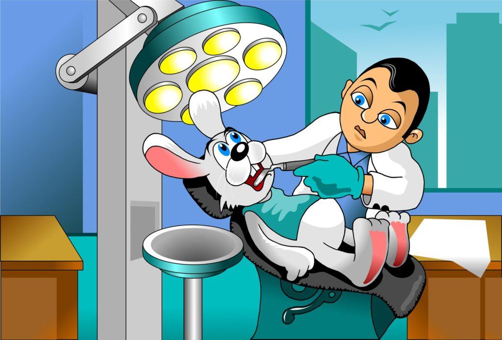 small gray rabbit at a reception at the dentist